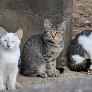 三匹の子猫が勢揃い