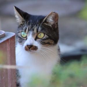 ビックリ顔の猫ちゃん