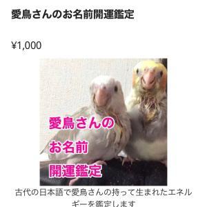 【愛鳥祭、出店のお知らせ】