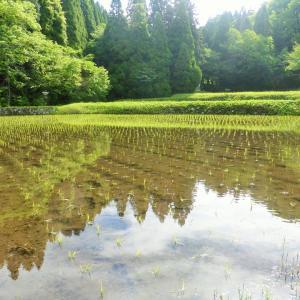 水汲みのシーズン2019「聖地・池山水源」