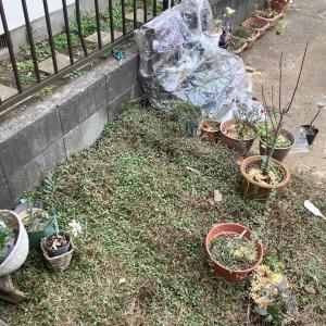 100均でエコなクリスマスの準備と庭の冬支度