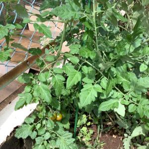 なんちゃって自然農法で8種類に野菜を育てる