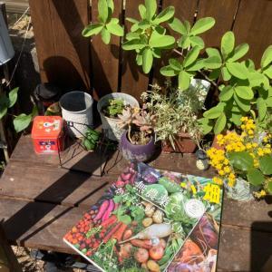 ぐうたら農法で家庭菜園