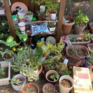 夏に向けて少しずつ進んでいる庭づくり