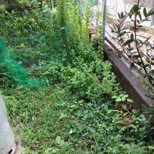 梅雨明けした後の家庭菜園