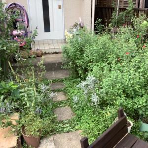 我が家の庭が大変なことに