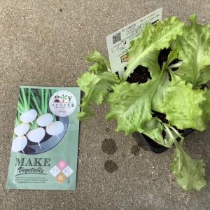 秋に向けて家庭菜園を再開した話