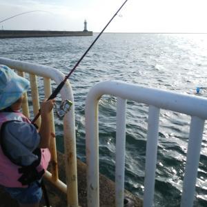 南港魚釣り園護岸でサビキ釣り。