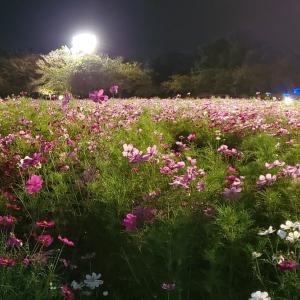 cosmos in the night