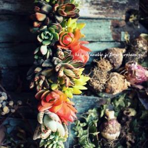 多肉植物の寄せ植え