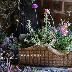 2月の園芸教室寄せ植え見本!