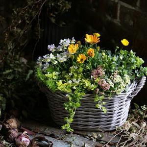 3月園芸教室で作る寄せ植え