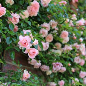 ポールトランソンと花壇