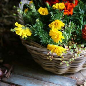 5月園芸教室の寄せ植え見本