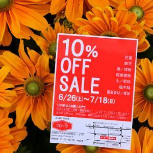 明日6/26(土)朝9:00より【10%OFF SALE!!!】始まりまーっす!