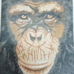 1-65-269 チンパンジー