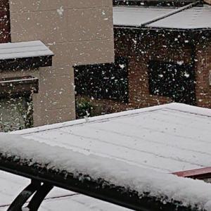 雪とコロナ対策で籠ってたらテンタメ行けず~ 💧