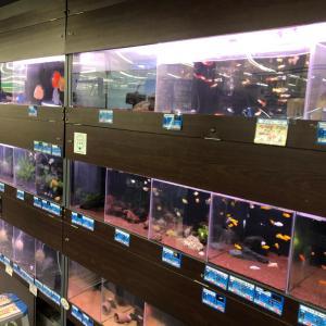 【門真店】熱帯魚コーナー増築&エサ入荷