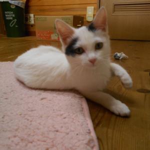 ネコらしい猫 ギンちゃん