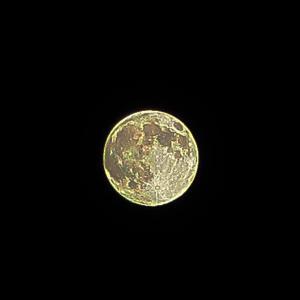 月の光は浸透する