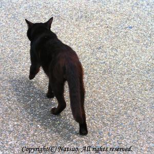 本日の1枚(黒猫通ります)
