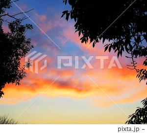 夕焼け雲と樹木の風景