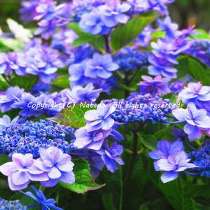 今月PIXTAへ登録した花の写真とか
