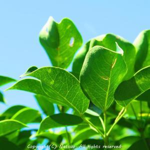 本日の植物図鑑