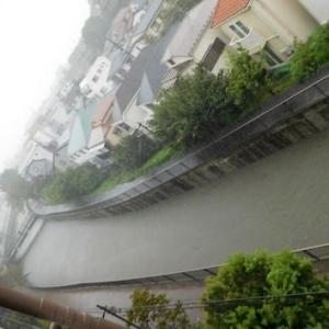 台風19号 善福寺川