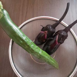 夏野菜☆初物収穫