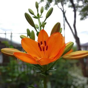 梅雨の花☆