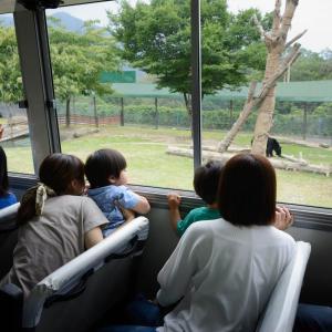サファリパークの動物たち