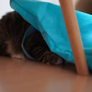 (猫859)袋に突撃してご満悦な愛猫ととりあえず内定出た飼い主と