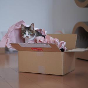 (猫865)箱入り娘と袋入り娘と