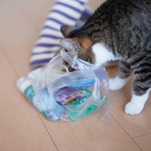 (猫867)先攻される飼い主とちゅ~る食べたくてとにかく攻める愛猫と