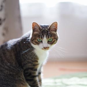 (猫868)奢るについて考える飼い主とカメラカタログ踏んづける愛猫と