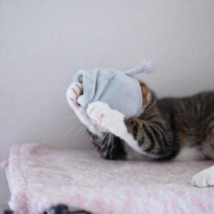 (猫869)内定を断る飼い主と被り物再び・・・!の愛猫と