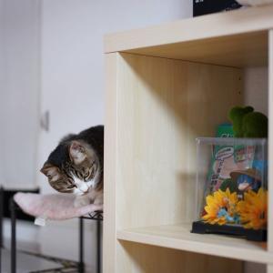 (猫870)ちゅ~るをちょす愛猫と相変わらず置き場所がぬるい飼い主と