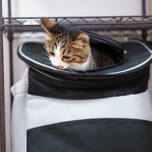 (猫873)転職活動情報が上司に筒抜けな飼い主と時には忍ぶ愛猫と