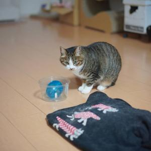 (猫874)転職活動を横流しされて一人焼き肉の飼い主とおやつ欲しい愛猫と