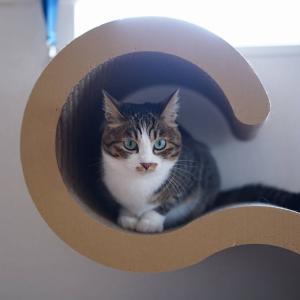 (猫876)ふるさと納税を忘れていた飼い主(´∀`;)うぉふ