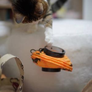 (猫892)提灯一本釣りの愛猫と器用さに舌を巻く飼い主と
