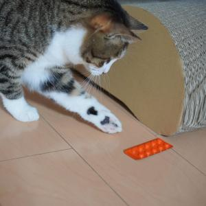 (猫894)可哀そうなエンターキーさんと薬でサッカーする愛猫と