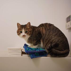 (猫896)風邪を引いた飼い主と風呂場で堂々としている愛猫と