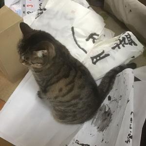 (猫931)じじどんのお習字に突撃する元子猫
