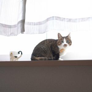 (猫957)タダより高いものはないことを痛感する飼い主と窓辺で観察する愛猫と