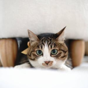 (猫961)確定申告で滑る飼い主とタイルカーペット散らかす愛猫と