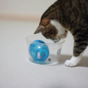 (猫995)エッグササイザーと楽しておやつ食べたい愛猫と