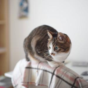 (猫999)1500日前を思う出す飼い主と久々に椅子に乗っかる愛猫と