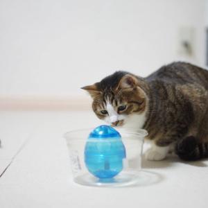 (猫1004)再入院のばばどんと難易度を下げが普通になった愛猫と